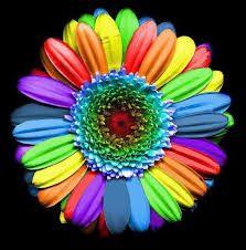 lindas imagenes de colores - Buscar con Google