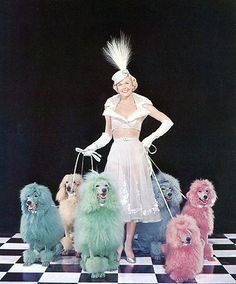 I want a rainbow of poodles!