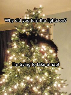 Here kitty kitty, here kitty kitty. Where is the kitty! Oh he's up in the Christmas tree, do you see him! Christmas Animals, Christmas Cats, Christmas Humor, Christmas Trees, Christmas Ornament, Christmas Photos, Merry Christmas, Christmas Lights, Cute Cats