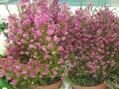 Reiki, Garden, Plants, Color, Home Decor, Garten, Decoration Home, Room Decor, Lawn And Garden