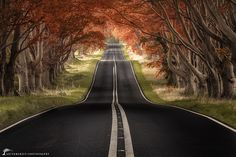 "https://flic.kr/p/yRRshb | ""Road to Fall"" | Beech Avenue, Dorset, UK"