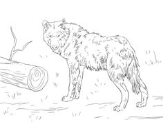 Euroasian Wolf Coloring Page From Category Select 30471 Printable Crafts Of Cartoons Nature Animals Bible And Many More