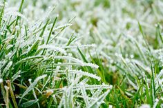 Winter is a very important time for your lawn. Ask us about winterizing your lawn to avoid diseases, bald patches, and weeds that will pop up in the spring.