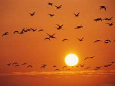 Birds fill an orange sky over Germany's Wattenmeer National Park via National Geographic Orange Bird, Orange Sky, Orange Color, Orange Aesthetic, Aesthetic Colors, Rainbow Aesthetic, Anders Dragon Age, Jaune Orange, Orange Wallpaper