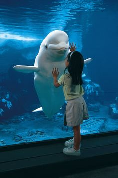 What a cute picture! Beluga whales can grow 10-15 feet long and weigh up to 3,300 pounds!