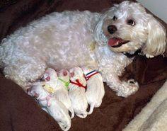 venta de cachorros garantizados