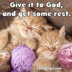 Uplifting and inspiring prayer, scripture, poems & more! Discover prayers by topics, find daily prayers for meditation or submit your online prayer request. Baby Kittens, Baby Bunnies, Good Night All, God Will Provide, Night Wishes, Angel Cards, Sleepy Cat, Lord And Savior, Gods Plan