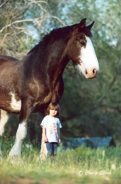 Clydesdale horse and child - I feel like some people underestimate the size of these beautiful creatures All The Pretty Horses, Beautiful Horses, Animals Beautiful, Cute Animals, Caballos Clydesdale, Clydesdale Horses, Breyer Horses, Big Horses, Horse Love