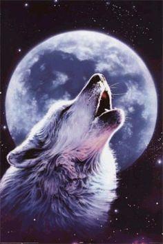 loup hurlant à la tombée de la nuit