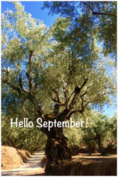 Welcome September!  Have a nice autumn season all of you!  (photo by Melia Freshline)