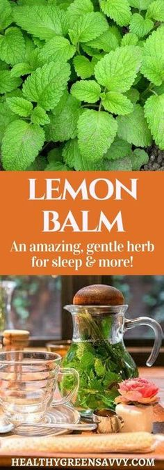 Uses for lemon balm: Lemon balm is far and away my favorite herb for better sleep! This amazing plant deserves a place in your garden and herbal remed Natural Health Remedies, Natural Cures, Natural Healing, Herbal Remedies, Healing Herbs, Medicinal Plants, Natural Medicine, Herbal Medicine, Medicine Garden