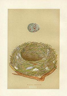 Francis Orpen Morris Missel Thrush Nest 1875