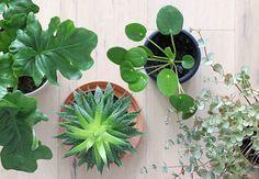 C'est avec grand plaisir que je vous retrouve aujourd'hui pour continuer la présentation de mes différentes plantes vertes ! Après les air plants, la monstera deliciosa, et les cactus, j'ai regroupé cette fois-ci troisplantes grassesde ma collection, toutes très faciles à entretenir.J'espère que mes indications vous seront utiles, et vous donneront éventuellement envie d'ajouter unLire la suite…
