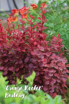 7 Tall and Slender Shrubs for Tight Spaces Small Shrubs For Shade, Small Evergreen Shrubs, Tall Shrubs, Shade Shrubs, Bushes And Shrubs, Tall Plants, Shade Plants, Shrubs For Landscaping, Water Wise Landscaping