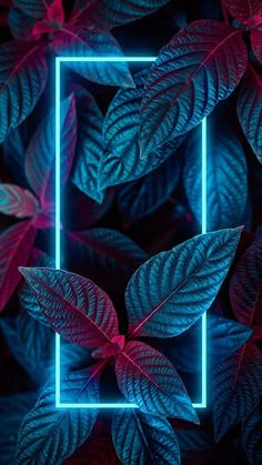 Neon Light Wallpaper, Neon Wallpaper, Graphic Wallpaper, Abstract Iphone Wallpaper, Apple Wallpaper, Colorful Wallpaper, Aesthetic Iphone Wallpaper, Aesthetic Wallpapers, Feather Wallpaper