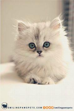 Oh you, cutie patootie! :3