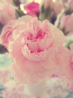 Lovely romantic flowers