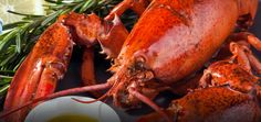 Top Notch Charters and Lobster Tours - Charlottetown, PEI