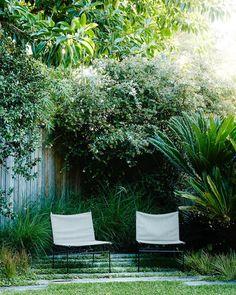Garden furniture with Abelia x grandiflora & Cycas revoluta - Garden Design Landscape Design, Garden Design, Patio Interior, Australian Garden, Natural Garden, Terrace Garden, Garden Planning, Garden Furniture, Outdoor Furniture
