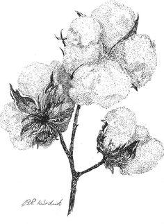 Alabama Cotton Drawing  - Alabama Cotton Fine Art Print