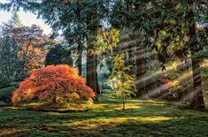 Roman Johnston, Autumn Light in The Maples, 2013 / 2014,  © fr.lumas.com, #Lumas