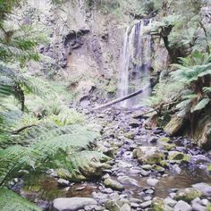 Where is Max?;) - 27.02.2016  #hopetoun #hopetounfalls #greatotway #australien #australia #reisen #travel #australien #waterfall #wasserfall #apollobay #greatotwaynationalpark by yoyomaus http://ift.tt/1LQi8GE