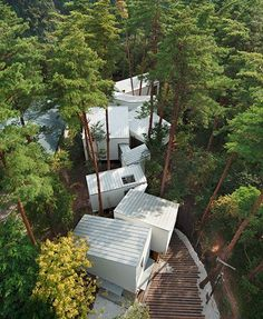 Site approach- A Japanese multi level forest home, built within the canopy, affording many benefits to all sides.