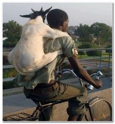 Most Crazy | most crazy photos 2013 man and goat the real friendship picture goat ...