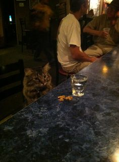 This cat is named George and sits at the bar every night. Via reddit (bathsaltrocker69)