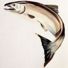 Salmon Acrylic on Canvas