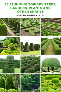 53 Stunning Topiary Trees, Gardens, Plants and Other Shapes 53 Stunning Topiary Trees, Gardens, Plan Topiary Plants, Topiary Garden, Topiary Trees, Boxwood Garden, Garden Plants, Tropical Landscaping, Front Yard Landscaping, Arborvitae Landscaping, Landscaping Jobs