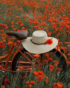Bicycle in a field of poppies ♥