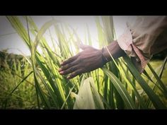 THE RIVER - Official music video for 'The River' by Nhlanhla Majozi. Directed by Tim Hay. Cameramen- Simon Wilkes and Yash ( Lucid Media). Shot at Umhlali river and The Litchi Orchard, Salt Rock. The Lumineers, Good Music, Salt Rock, Music Videos, Told You So, River, Musicians, Youtube, Interview