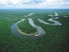 Brazilian-Amazon