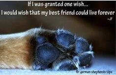 If I had one wish