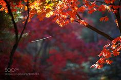 Autumn morning. by JAMES-CORY. Please Like http://fb.me/go4photos and Follow @go4fotos Thank You. :-)