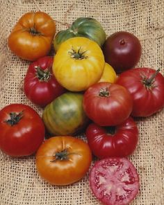 Tomato 'Heirloom Blend'  A full line of Brandywine Tomatoes; Black, Pink, Red and Yellow, add to that some Cherokee Purple, Green Zebra, White Wonder and a beautiful orange, like Nebraska Wedding and you have an heirloom pack that cannot be beat.