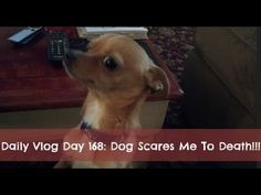 Daily Vlog Day 168:Dog Scares Me To Death!!!