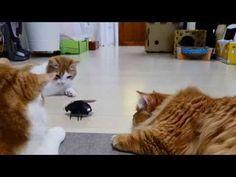 Cats vs. Robot