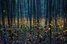 Fireflies just above the ground by Nomiyama Kei
