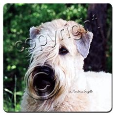 Wheaten Terrier Dog Magnetic NOTEPAD Note List Pad