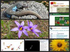 Herramientas Online de consulta sobre biodiversidad y territorio en Canarias