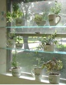Glass shelves for herb window with white pots