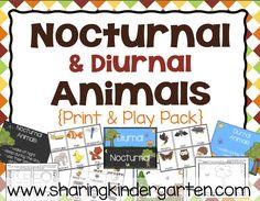 Nocturnal Animals Pr