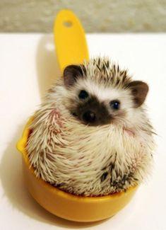 My Latest Obsession: Cute Animal Photos