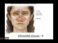 Sphenoid & Ethmoid Bone - Cranium - Skull - YouTube