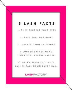 Lash Facts Beauty Routine Planner, Beauty Routines, Beauty Hacks Eyelashes, Perfect Cat Eye, 3d Fiber Mascara, Eyelash Growth Serum, Beautiful Eyelashes, Beauty Bar