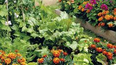 Každý z nás by chcel vo svojej záhradke zberať bohatú úrodu pri čo najmenšej starostlivosti. Ešte lepšie, ak sa to zaobíde bez veľkého hnojenia či chemickej ochrany. Vraj sa to nedá?