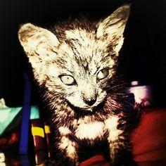 Cat. Animal #4