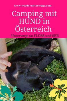 Einmal Camping mit Hund quer durch Österreich: Teil 1 unseres Reiseberichts - Tirol und Vorarlberg. Camping, Dogs, Animals, Roadtrip, Sport, Caravan, Traveling, Wanderlust, Hotels